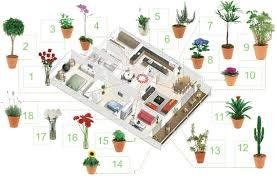 Feng Shui E Ufficio : Piante d appartamento e feng shui lavocedelnoce
